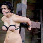 Third pic of SexPreviews - Penny Barber is rope bound with tits exposed and pussy toyed