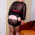 Third pic of Fanny Frolics - Brown Lacy Stockings